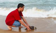 Thả con đồi mồi dứa cực kỳ quý hiếm về với biển
