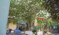 Hẻm 146/97 Vũ Tùng- phường 2- quận Tân Bình: Bà conbức xúc nạn đá gà