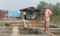 Vụ cá bè chết hàng loạt, trách nhiệm lại đổ lên đầu nông dân