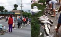 Người dân mang cá chết chặn Quốc lộ, đề nghị chính quyền làm rõ nguyên nhân