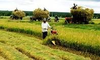 Bảo hiểm nông nghiệp: Góp phần giữ vững an ninh lương thực