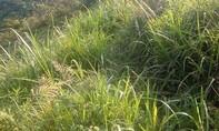 Nam thanh niên hiếp dâm bé gái 14 tuổi tại bãi đất trống