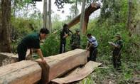 Một cán bộ giữ rừng bị chém chết tại trạm