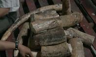 Phát hiện thêm 2 container ngà voi nhập lậu từ Châu Phi về Việt Nam