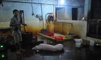 Đồng Nai: Xử phạt 3 cơ sở giết mổ heo không phép