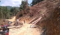 Huyện Thạch Thành – Thanh Hóa: Chuyển đổi rừng hay phá rừng?