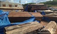 Phát hiện bãi tập kết gỗ lậu vô chủ