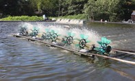 Nuôi tôm tràn lan khiến nước sinh hoạt bị nhiễm mặn