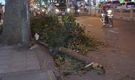Nhánh cây gãy đè cả gia đình đang đi trên đường phố Sài Gòn