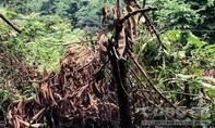 Cái chết bí ẩn của người đàn ông trong rừng