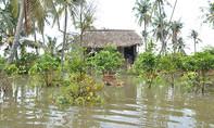 Vỡ bờ bao sông Sài Gòn, hơn 50 ngàn gốc mai Tết bị chìm trong nước