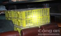 Kinh hoàng xe khách để 120 con rắn hổ mang ở chung với người