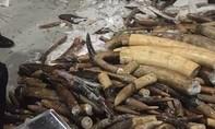 Phát hiện 600 kg ngà voi được giấu kín trong các khối gỗ rỗng ruột