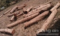 Huyện ủy Tánh Linh chỉ đạo làm rõ sai phạm ở rừng phòng hộ La Ngà