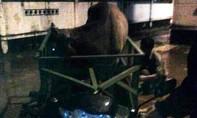 Bị truy đuổi, hai tên trộm bò vứt xe tẩu thoát