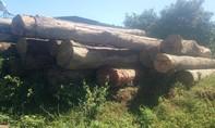 Khởi tố, bắt giam 3 đối tượng chặt hơn 30m3 gỗ ở Gia Lai