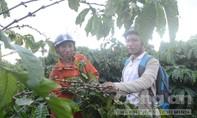 Bộ Công an chỉ đạo ngăn chặn nạn trộm cà phê tại Tây Nguyên