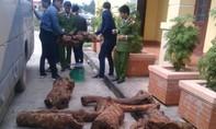 Thu giữ hơn 400kg gỗ hương giáng trên một xe khách