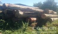 Liên tiếp phát hiện số lượng gỗ lậu 'khủng'