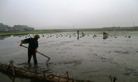 Gần 41 tỉ đồng hỗ trợ nông dân có lúa, mạ chết rét