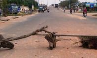 Người dân dùng cây chặn xe tải chở đất gây bụi mù mịt