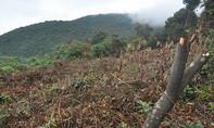 """Rừng bán đảo Sơn Trà bị tàn phá, dân bức xúc """"tung"""" lên mạng xã hội"""