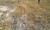 Bình Thuận công bố tình trạng hạn hán, thiếu nước nghiêm trọng