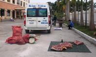 Bắt xe khách vận chuyển 289kg thịt heo không có giấy tờ kiểm dịch