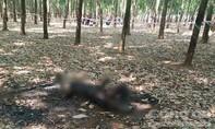 Tổng hợp ANTT ngày 14-3: Nghi án giết người, đốt xác phi tang; Ba người bị chém trước phòng trọ