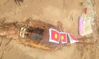 Phát hiện xác cá voi dạt vào bờ biển, ngư dân tổ chức chôn cất