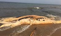 Xác cá voi nặng 5 tấn, dài 10m trôi dạt vào bờ biển