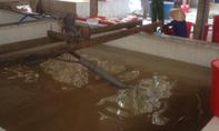 Bắt quả tang cơ sở sản xuất mặt nạ dừa gây ô nhiễm môi trường