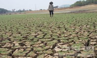 Các tỉnh Tây Nguyên được hỗ trợ trên 108 tỷ đồng khắc phục hạn hán