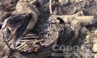 Đắk Lắk: Voi con sa lầy, chết bên bờ hồ