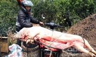Người đàn ôm xẻ thịt heo chết vì dịch đem ra chợ bán