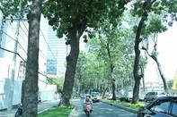 UBND TP đồng ý phương án bứng dưỡng trước 14 cây Sọ Khỉ trên đường Tôn Đức Thắng