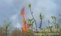 Cháy rừng thông trên đèo Mang Yang