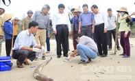 Gần 30 tấn cá chết dạt vào bờ biển Quảng Trị