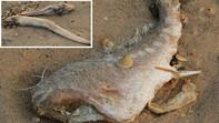 Vụ cá chết hàng loạt: Nghi vấn ống xả thải khổng lồ dưới biển Vũng Áng