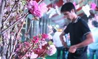 Hàng ngàn người dân đổ về Đồng Nai tham gia lễ hội hoa anh đào 2016
