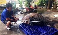 Cá hô nặng 118kg về TP.HCM
