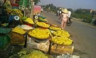 Phát hiện măng tẩm hóa chất nhuộm vàng tại Huế