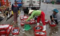 Lãnh đạo thành phố Đà Nẵng chỉ đạo khẩn tiêu thụ hải sản sạch