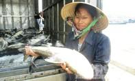 Cá chết trên sông Bạng do ô nhiễm từ việc tàu thuyền đi lại?