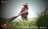 Dàn dựng cảnh  dùng chổi quét rau trong phóng sự, phóng viên VTV gây phẫn nộ