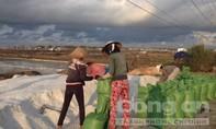 Diêm dân bỏ ruộng vì muối lại rớt giá