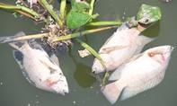 Cận cảnh cá chết trên kênh Nhiêu Lộc - Thị Nghè