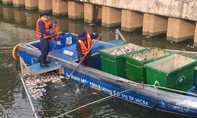 Thường trực Thành uỷ TP.HCM: Khẩn trương chỉ đạo giải quyết tình trạng cá chết ở kênh Nhiêu Lộc - Thị Nghè