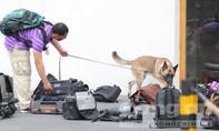 Mật vụ Mỹ đưa chó nghiệp vụ kiểm tra dụng cụ tác nghiệp của phóng viên