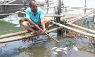 Cá biển, cá nuôi lại chết hàng loạt tại Thừa Thiên - Huế